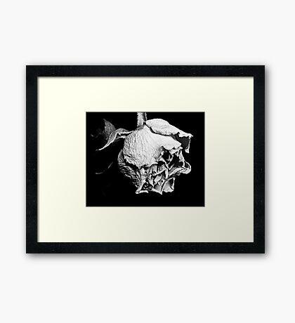 Passato il primo Rose Framed Print