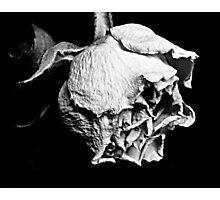 Passato il primo Rose Photographic Print