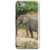 Elephant in the african savannah iPhone Case/Skin