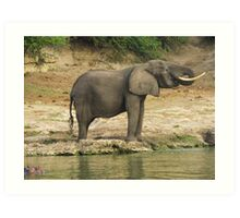 Elephant in the african savannah Art Print