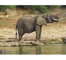 Elephant in the african savannah Photographic Print