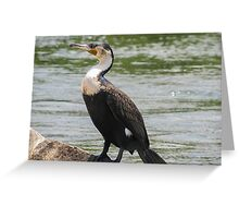 cormorant on lake Greeting Card