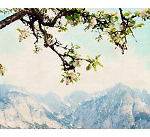 Apple Blossoms and Mountains  Photographic Print