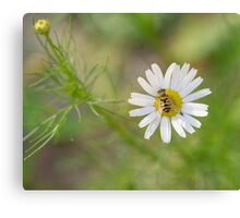 Landing on a flower Canvas Print
