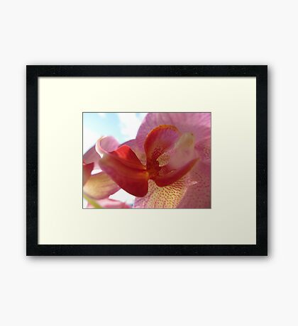 Orchid Moments Framed Print