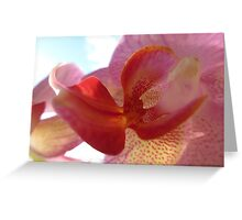 Orchid Moments Greeting Card