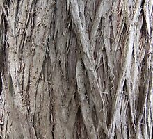 Cedar Bark by Martha Medford