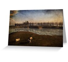 Conference Of Sheep Greeting Card