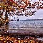 A rainy day during fall at Sörknatten / Baståsen & the Ärr lake by João Figueiredo