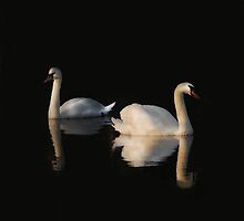 Two Swans by Matthew Laming