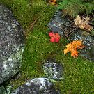 Autumn Colors on a Rock Wall by Wayne King