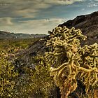 Cholla: Saguaro National Park East - Tucson Arizona by Roger Passman