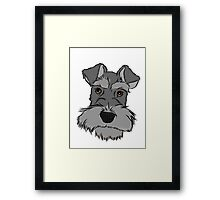 Adorable Miniature Schnauzer Framed Print