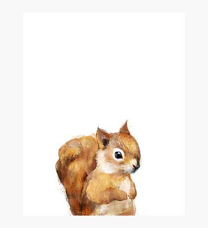 Little Squirrel Photographic Print