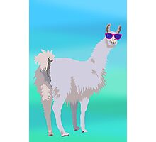 Cool Llama In Sunglasses Photographic Print