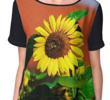 Beautiful sunflower on blue sky background, summer day, season specific Chiffon Top