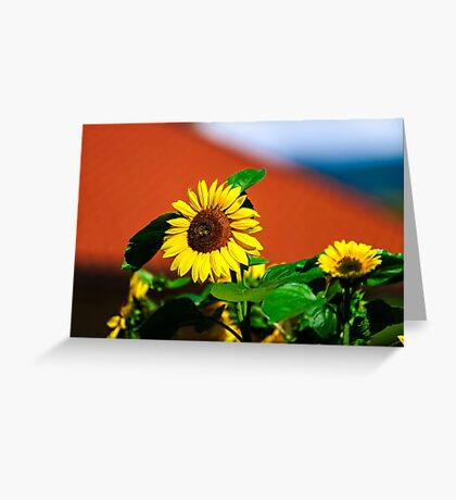 Beautiful sunflower on blue sky background, summer day, season specific Greeting Card