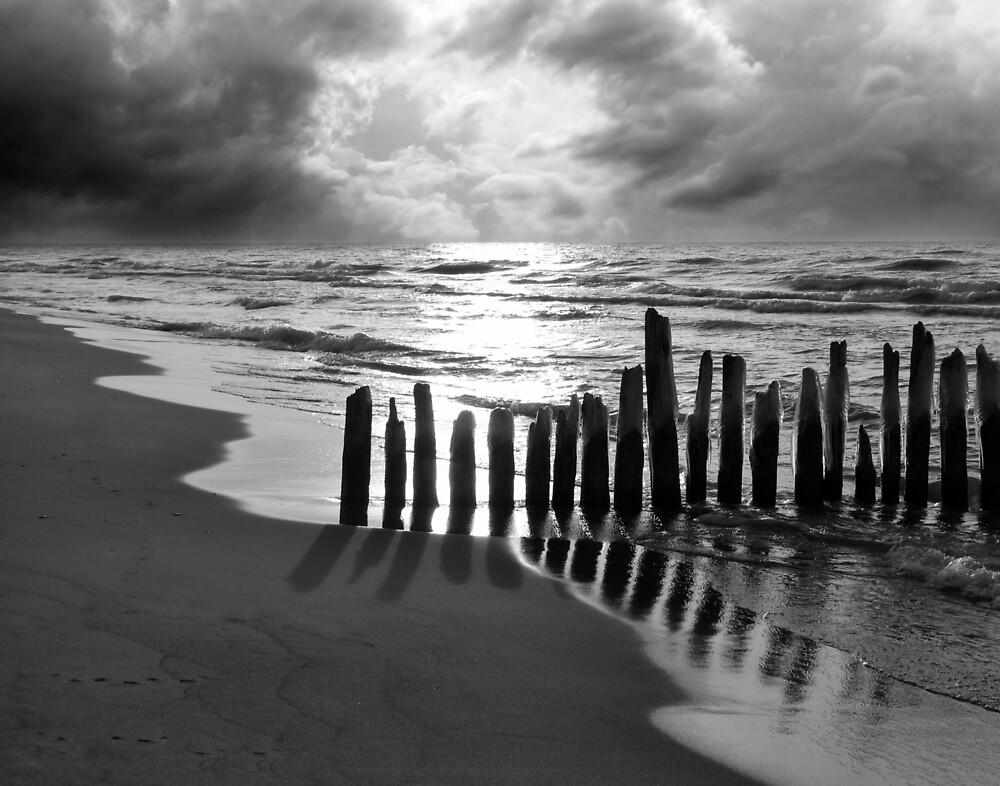 Where Seagulls Roam by Kathilee