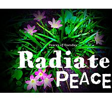 Radiate Peace Lilies Photographic Print