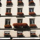 Red geraniums in Paris by Carol Dumousseau