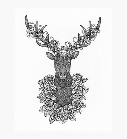O Deer Portrait Drawing Photographic Print