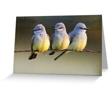 sought after spot- western kingbirds Greeting Card