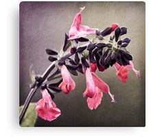 Spring Pink Blossoms Canvas Print
