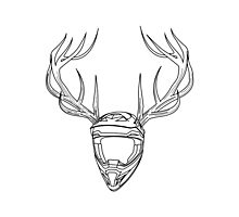Mx Stag Head Photographic Print