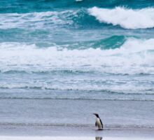 Yellow-eyed penguin solitude Sticker