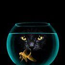 Black Cat Goldfish II by Vin  Zzep