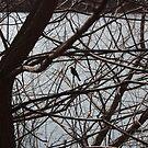 Black Bird Silhouette by Littlehalfwings
