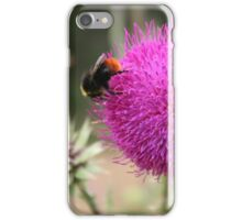 Pink thistle iPhone Case/Skin