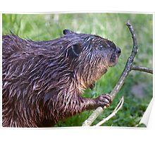 Eager Beaver Poster
