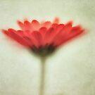 Flower Whispers by Priska Wettstein