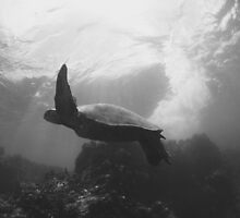 Sea Turtle III by loveandwater