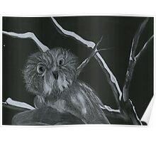 White Pencil Owl Poster