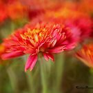 Mums! by KatMagic Photography