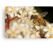 Honey Time Canvas Print