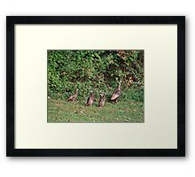 First lesson in survival Framed Print
