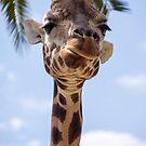 Curious Giraffe  by Denny0976