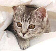 hello kitten by lucyliu