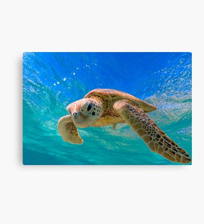 Green Turtle in Magical Water Canvas Print