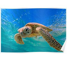 Green Turtle in Magical Water Poster