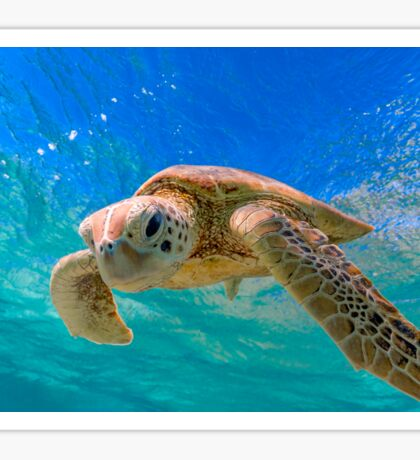 Green Turtle in Magical Water Sticker