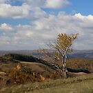 A Tree on the Hill in Barda, Romania by Dennis Melling