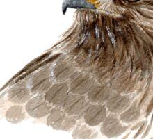 Hawk Eye Sticker