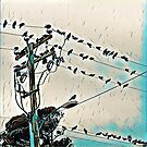Birds on a Wire by Susan Werby