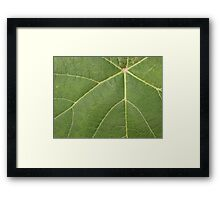 Grape Leaf Framed Print