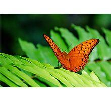Orange Cruiser Photographic Print