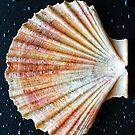 Shell - iPad case by Silvia Ganora by Silvia Ganora